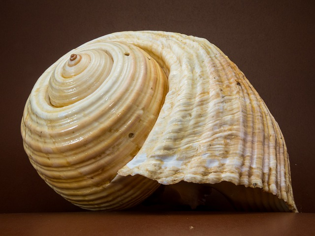 Shell, Snail, Close