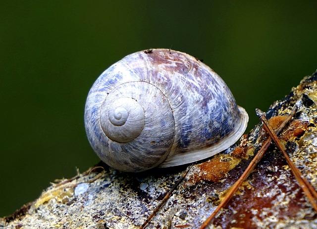 Snail, Animal, Nature, Shell, Fauna, Animal World