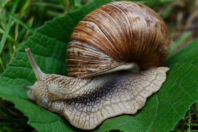 Snail, Snails, Nature, Macro, Slugs, Shell, Grass