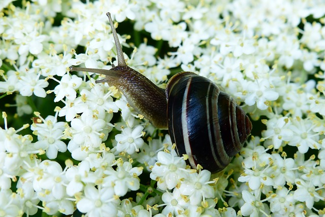 Animals, Invertebrates, Molluscs, Snail, Nature