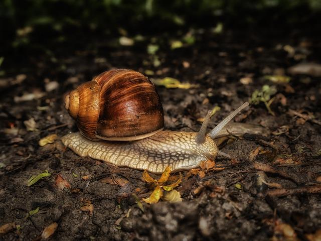 Snail, Nature, Mollusk
