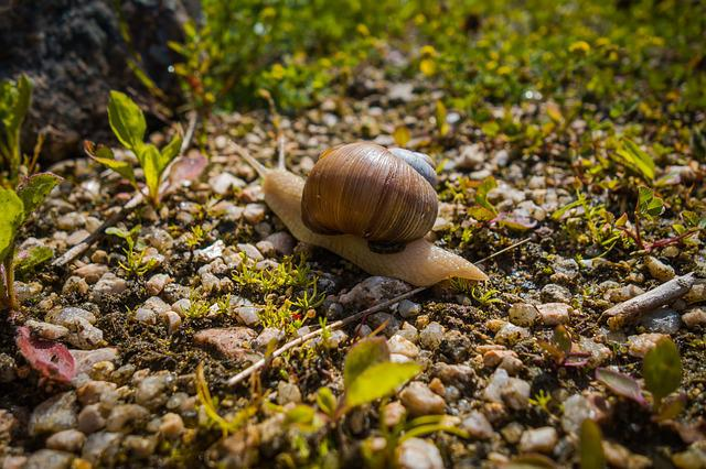 Worm, Snail, Nature, Conch, Animal, Snail Shell, Macro