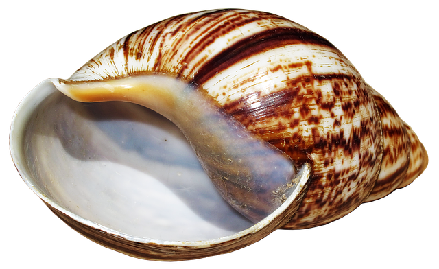 Shell, Snail, Achatina Fulica, Casing, Snail Shell