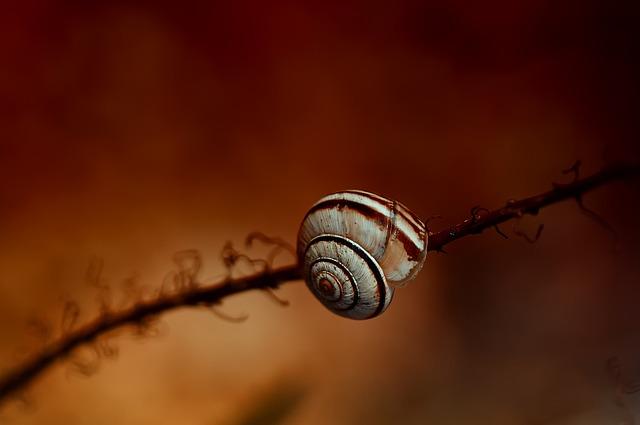 Nature, Snail, Shell, Garden, Snail Shell, Orange