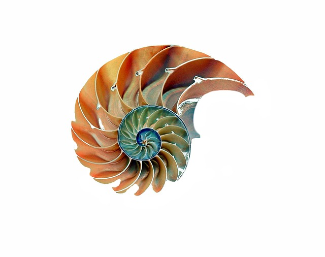 Shell, Snail, Nautilus, Snail Shell, Spiral, Nature