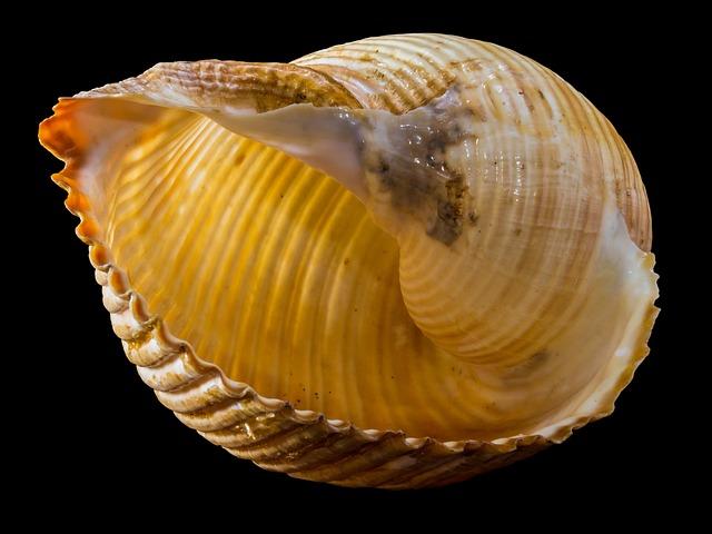 Shell, Snail Shell, Snail