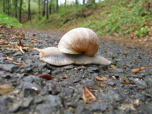 Snail, Forest Path, Slowly
