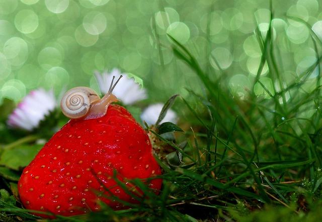 Snail, Shell, Mollusk, Close, Snail Shell, Slowly