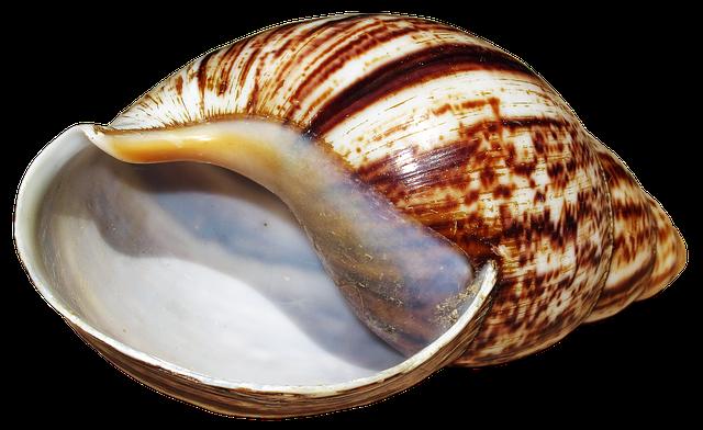 Shell, Snail, Achatina Fulica, Housing, Snail Shell