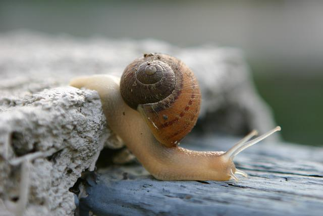 Wo Niu, Shell, Crawling, Snails, Schell