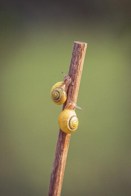 Snails, Yellow, Shell, Close, Garden, Housing, Spiral