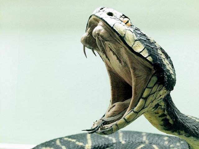 Snake, Cobra, Dangerous, Reptile, Animal, Nature