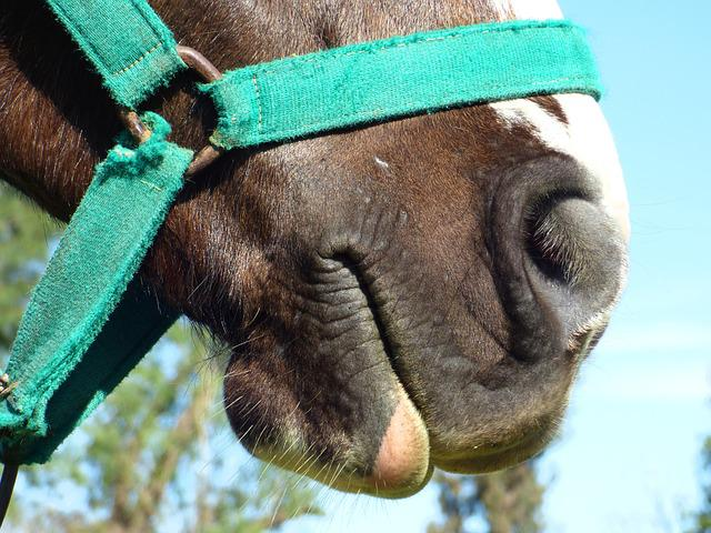 Equine, Horse, Snout, Animal