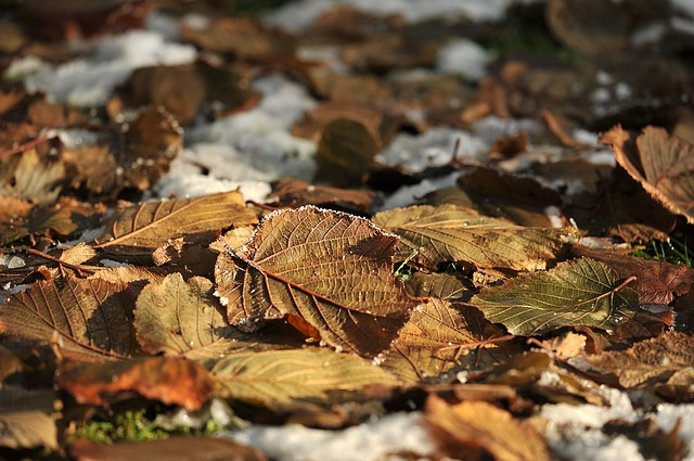Leaves, Garden, Snow, Autumn