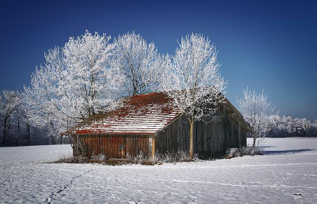 Snow, Winter, Cold, Frost, Barrack, Barn, Ripe, Nature