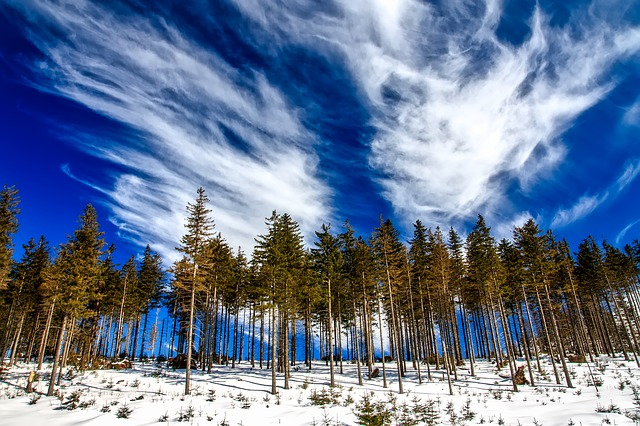 Poland, Landscape, Tree Line, Sky, Clouds, Winter, Snow