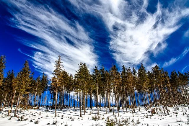 Poland, Landscape, Tree Line, Sky, Clouds, Winter, Snow
