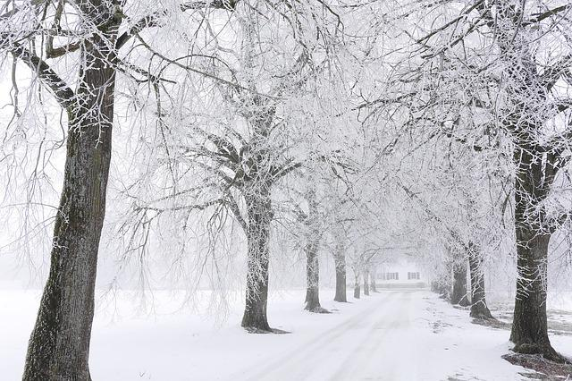 Winter, Snow, Tree, Cold, Frost, Weather, Road, Avenue