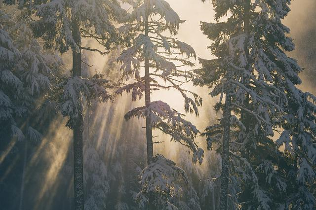 Cold, Fog, Nature, Outdoors, Snow, Trees, Weather