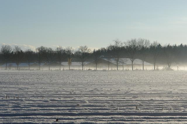 Veluwe, Snow, Fog
