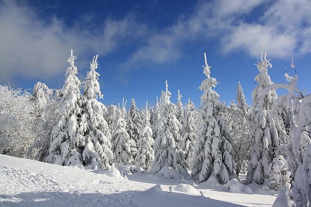 Snow, Winter, Frost, Cold, Frozen, Snowy, Landscape