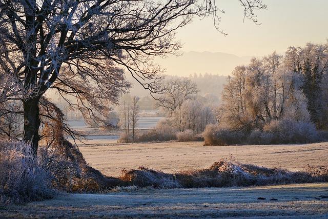 Nature, Tree, Landscape, Winter, Snow, Dawn, Frost