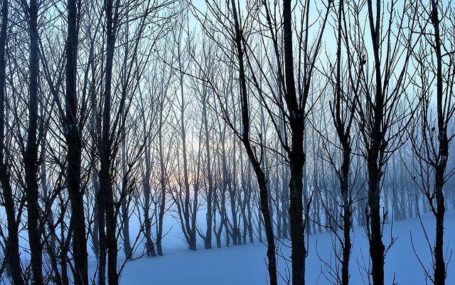 Mist, Hazy, Winter, Tree, Sunset, Branch, Snow
