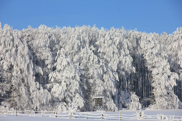 Winter, Snow, Ice, Forest, Trees, White