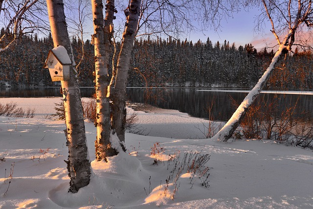 Winter Landscape, Snow, Trees, Birch, Lake, Winter