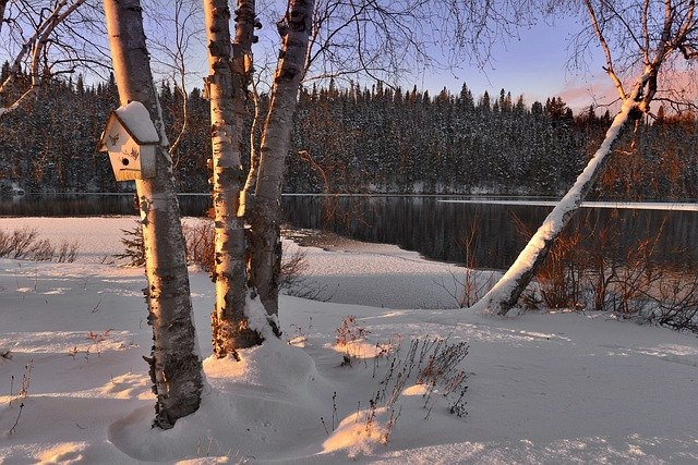Winter Landscape, Snow, Trees, Birch, Lake, Winter
