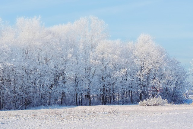 Landscape, Trees, Winter Impressions, Wintry, Snow