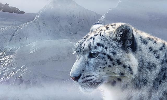 Snow Leopard, Leopard, Snow, Ice, Glacier, Mountains