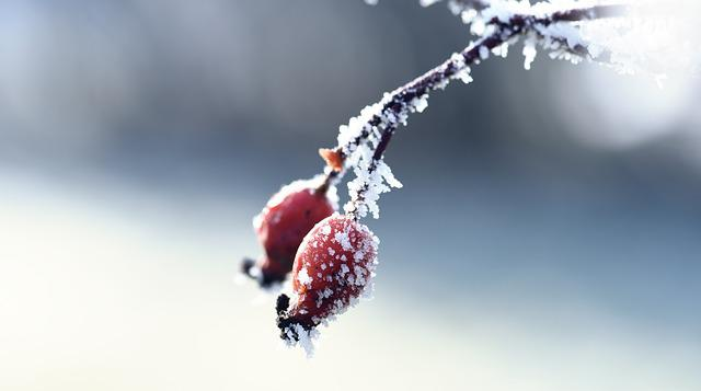 Nature, Winter, Frost, Snow, Macro