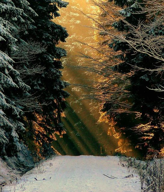 Winter, Snow, White, Wintry, Snow Magic, Snowy