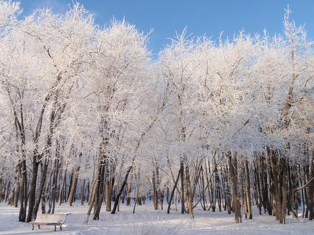 Snow, Winter, Park, Frost, Beauty, Landscape