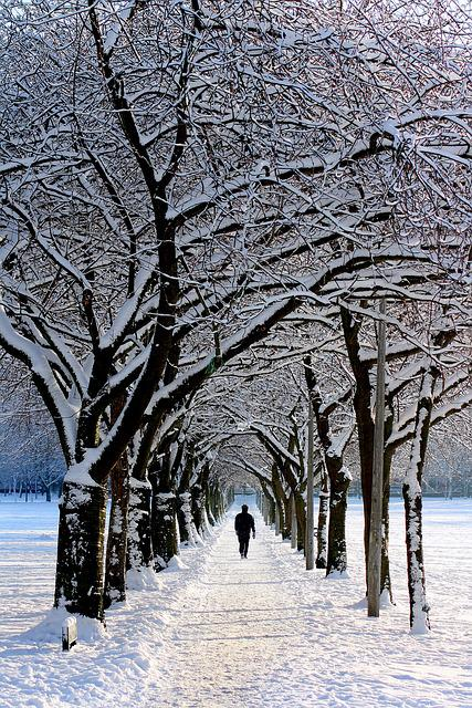Alone, Avenue, Cold, Landscape, Park, Person, Snow