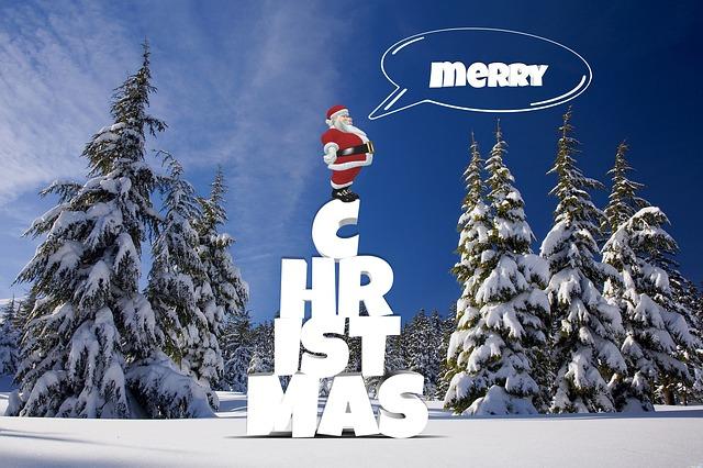 Christmas, Winter, Forest, Snow, Pine, Christmas Tree