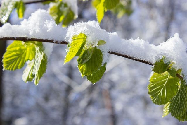 Leaves, Snow, Winter Blast, Green, Spring, Snowy, Road