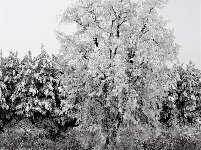 Romance, Snowy, Snow Romance, Nature, Frost, Snow
