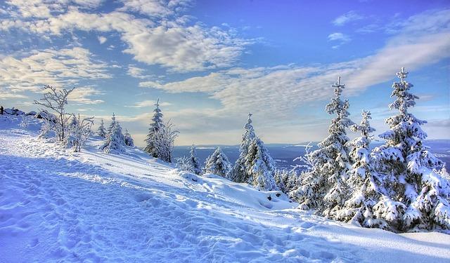 Snow, Winter, Cold, Frost, Frozen, Wood, Season