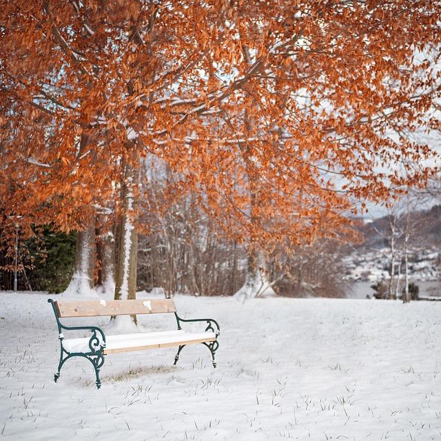 Snow, Winter, Season, Tree, Cold, Bench, Bank, Park