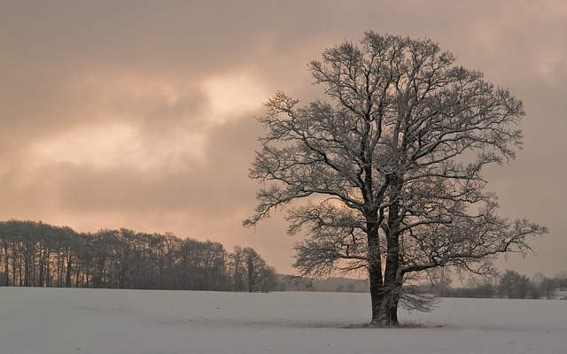 Tree, Nature, Snow, Winter, Old Tree, Winter Trees