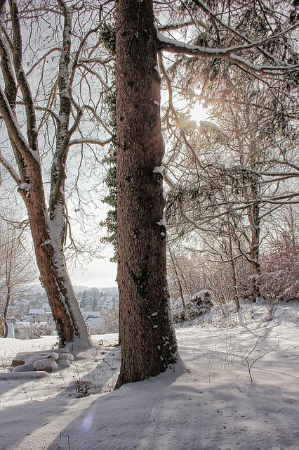 Winter, Snow, Winter Sun, Tree, Back Light, Wintry