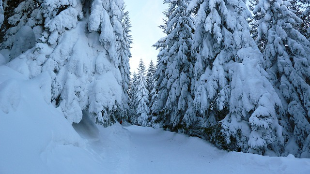 Backcountry Skiiing, Winter, Snow, Allgäu, Trees