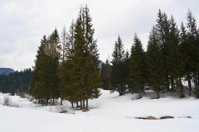 Mountains, Snow, Trees