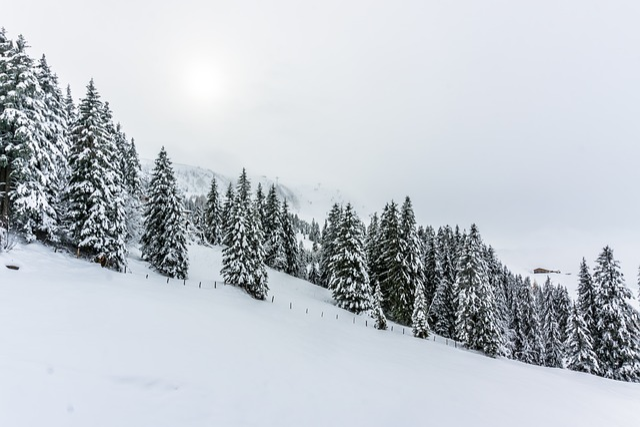 Winter, Snow, Snow-covered, Wintry, Eiskristalle, Bush