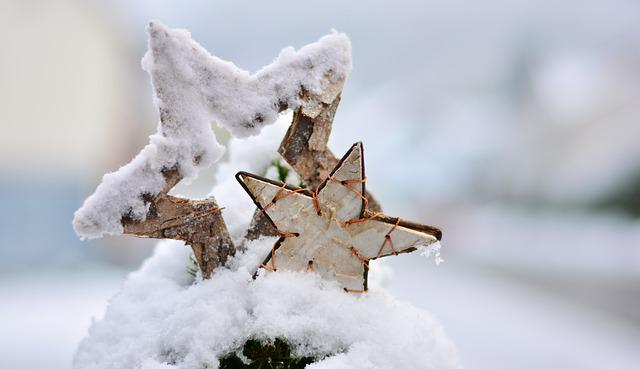 Snow, Winter, Wintry, Star, Poinsettia, Christmas, Cold