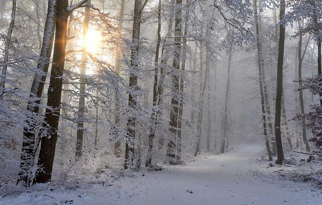 Snow, Winter, Forest, Nature, Cold, Snow Landscape