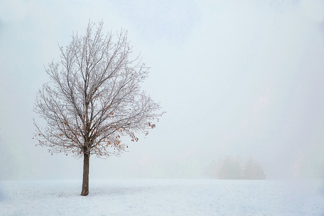 Landscape, Snow, Winter, Haze, Mist, Fog, Sunrise