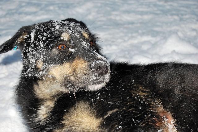 Dog, Snow, Joy, Winter, Fun, Friend, Nature, Walk